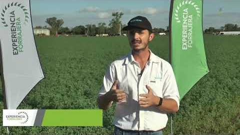 Embedded thumbnail for Cómo y por qué cerrar la grieta en el cultivo de alfalfa