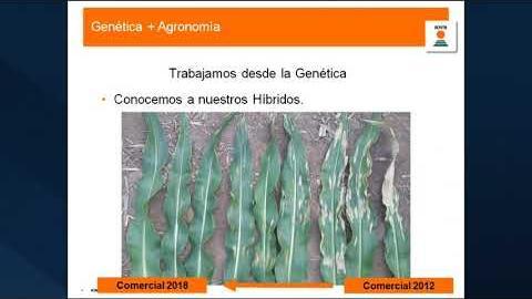 Embedded thumbnail for EXPERIENCIA ONCATIVO 2019 Genética de KWS