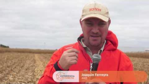 Embedded thumbnail for Joaquín Ferreyra – KWS
