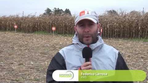 Embedded thumbnail for Federico Larrosa, de KWS