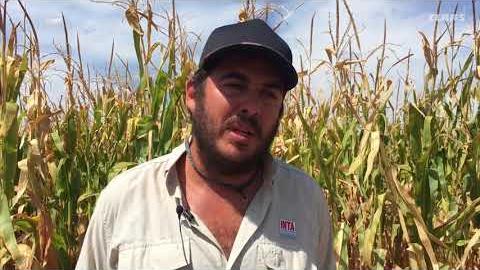 Embedded thumbnail for Walter Miranda se refiere a los desafíos que tiene el maíz